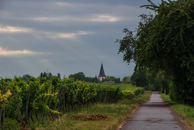 Rheinebene / Rhine Valley
