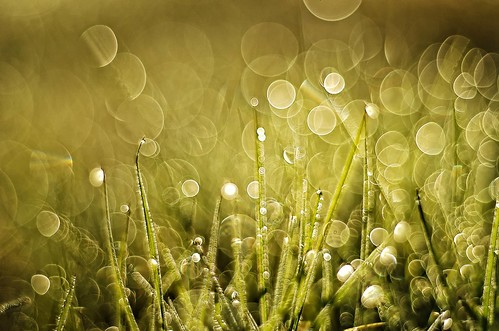 Grass and bubbles