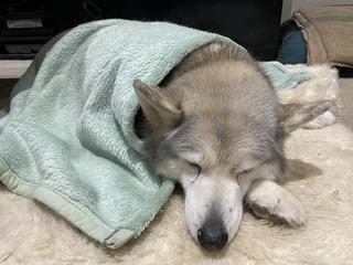 Last photo of Myka