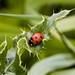 """<p><a href=""""https://www.flickr.com/people/125145243@N05/"""">georgehart64</a> posted a photo:</p>  <p><a href=""""https://www.flickr.com/photos/125145243@N05/50074447712/"""" title=""""Ladybird""""><img src=""""https://live.staticflickr.com/65535/50074447712_a5277cde64_m.jpg"""" width=""""240"""" height=""""240"""" alt=""""Ladybird"""" /></a></p>"""