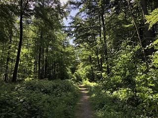 Beautiful mixed woodland