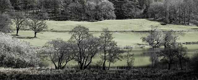 Loughrigg Tarn Scene (NT)