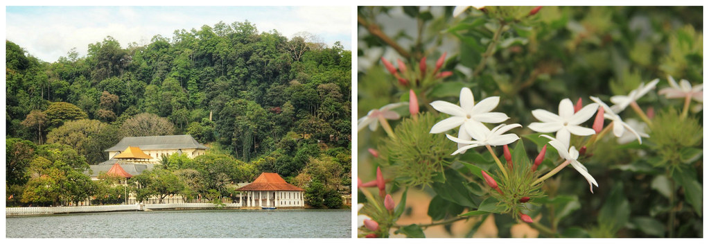 Udawattakele Sanctuary on the hill behind the Temple of the Tooth, Kandy