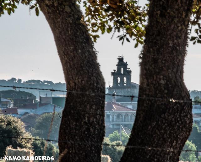 zamayon, torre iglesia troncos