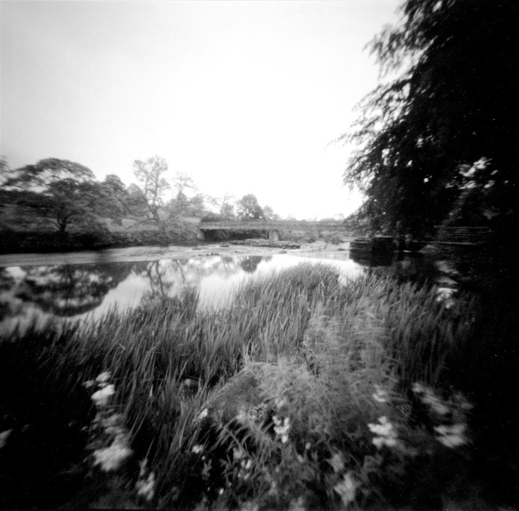 Reedbed, River Wharfe