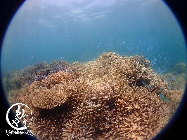 珊瑚がとってもきれいなポイントへ~♪♪