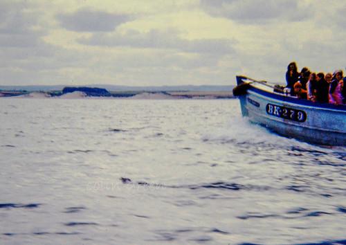 Farne Islands Boat Trip 1973