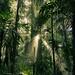 Dorrigo National Park Australia [6000x4000] [OC]