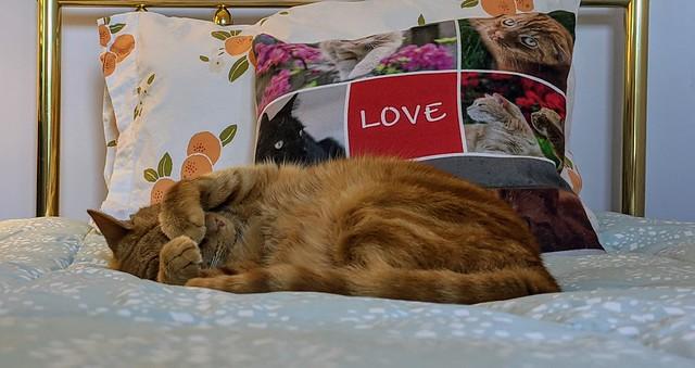 Mack's favorite possession - the fluffy comforter