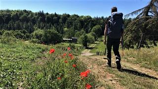 Trail towards Marsberg