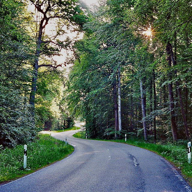 Country road in morning light