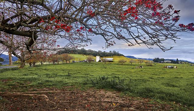 Jamberoo - South Coast - NSW