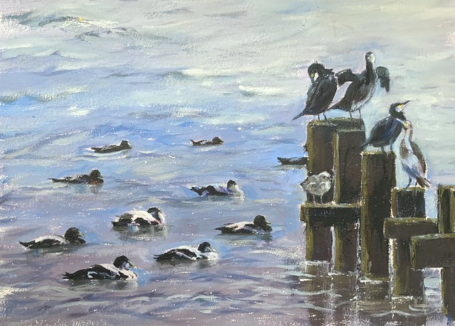 Eiders and cormorants