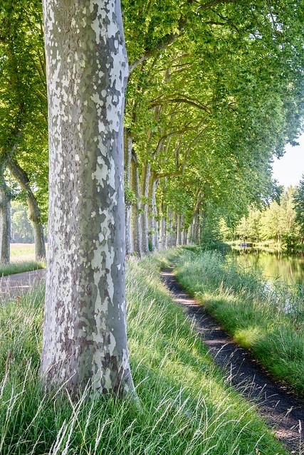 Castanet Tolosan - Canal du Midi