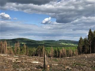 Dead forest - Sauerland