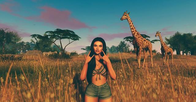 Sunset safari!