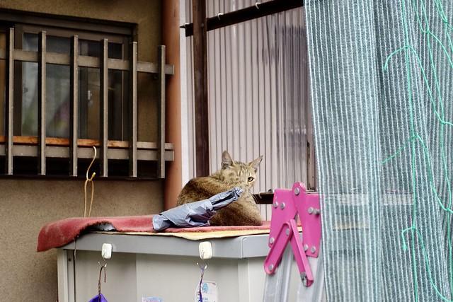 Today's Cat@2020ー07ー04