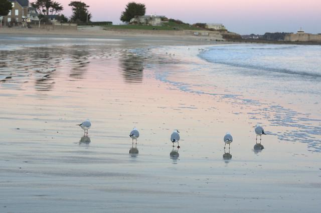 balade sur le sable  . . .avec la distanciation physique