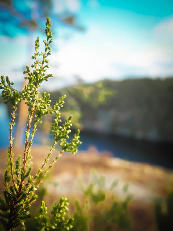 Haukkavuori