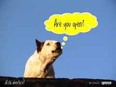 Are you open? #roofdog