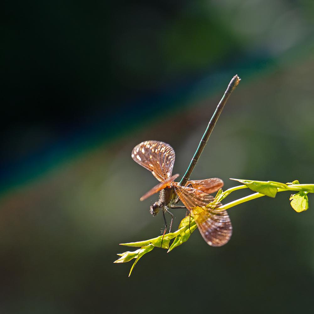 Macros/  proxi/  insectes  - Page 4 50075920928_d0afbb3304_o