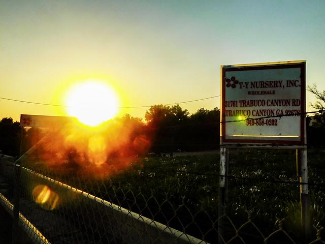 Sunset at the Nursery