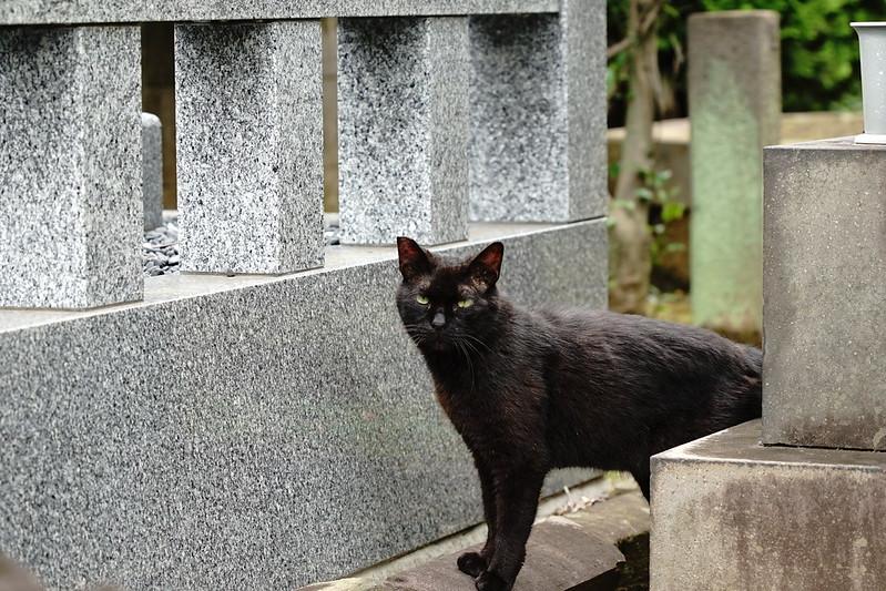 Sony α7Ⅱ+TAMRON 28 200mm f2 8 5 6 Di Ⅲ RXD雑司ヶ谷霊園の墓守猫 黒