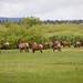 Elks gathering