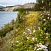 Wild Flowers and Schwatka Lake