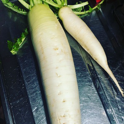 大根もボチボチ収穫。間引き忘れて二本生えたりしてるw食べきれない分をマイ産直サークルに出品しました。