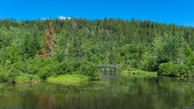 Marais du Nord, Nord du Lac Saint-Charles, PQ, Canada - 4673