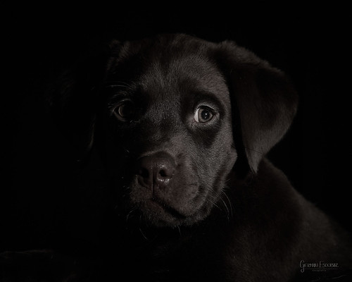 Ralf - black on black - GEA04753 - SONY | by gedaesal
