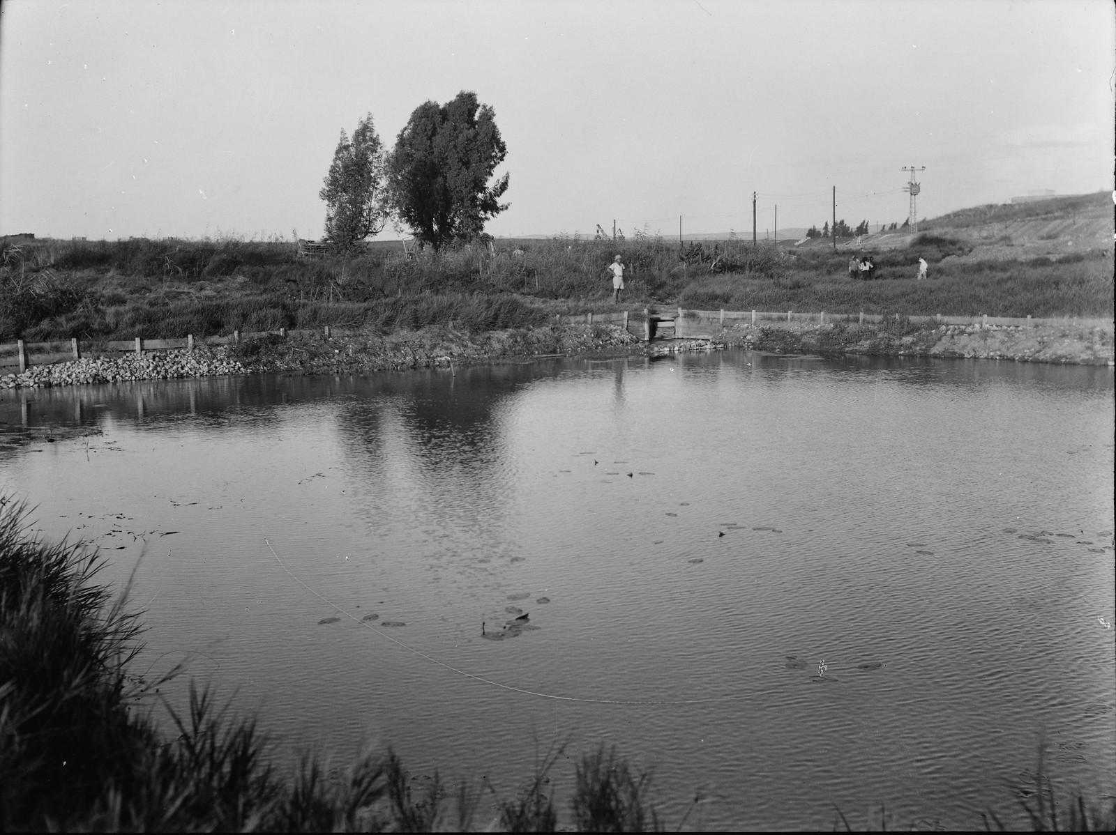 03. Рас-эль-Айн. Исток реки Ауя. Водохранилище, которое собирает воду многих источников