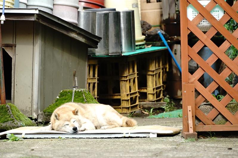 Sony α7Ⅱ+TAMRON 28 200mm f2 8 5 6 Di Ⅲ RXD雑司ヶ谷霊園の犬