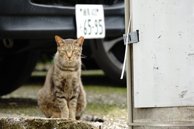 Sony α7Ⅱ+TAMRON 28 200mm f2 8 5 6 Di Ⅲ RXD南池袋屋根の上の猫だまりの猫 キジ虎
