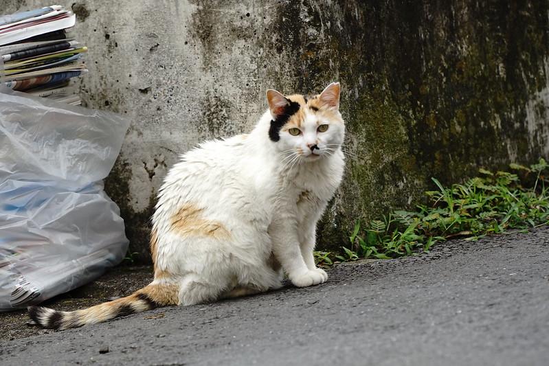 Sony α7Ⅱ+TAMRON 28 200mm f2 8 5 6 Di Ⅲ RXD南池袋屋根の上の猫だまりの猫 白三毛