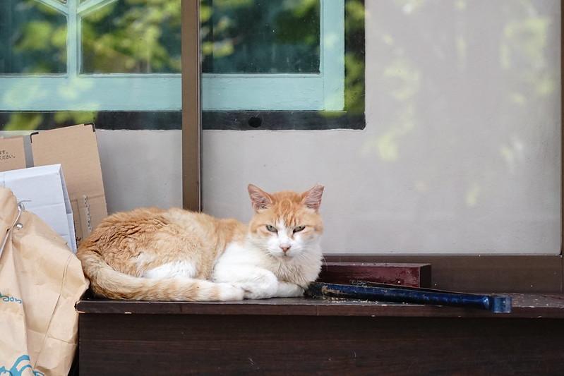 Sony α7Ⅱ+TAMRON 28 200mm f2 8 5 6 Di Ⅲ RXD雑司ヶ谷大鳥神社路地の猫 茶白