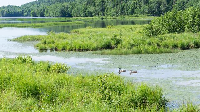 Marais du Nord, Nord du Lac Saint-Charles, PQ, Canada - 4654