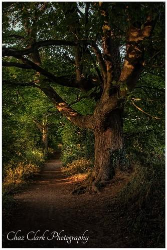 ladyswalk sunset trees pathway woods nikonphotographer nikond500 nikon20mmf18
