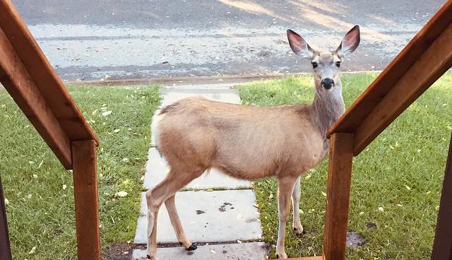 Visitor for Sunday Dinner