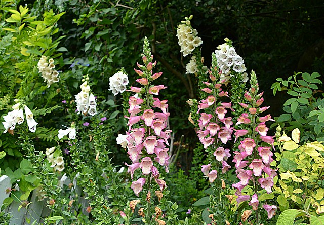 In an English Cottage Garden