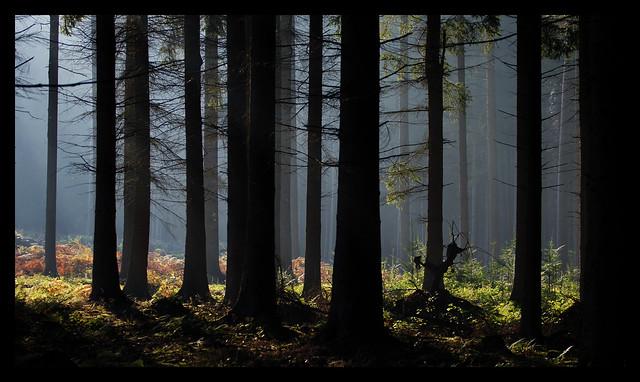 Arminius & Widukinds Wald