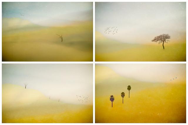 Altered reality Kiama hills