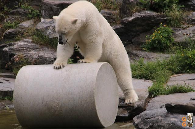 Tierpark 21.06.20 Wasserzeichen (47)