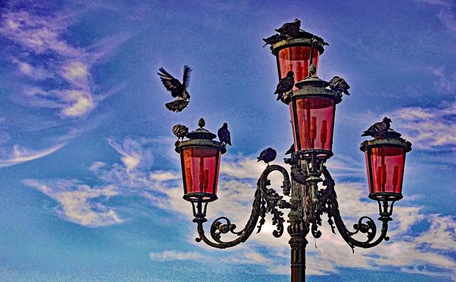 Les Pigeons de Venise