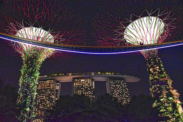 Night at Super Tree Grove, Singapore