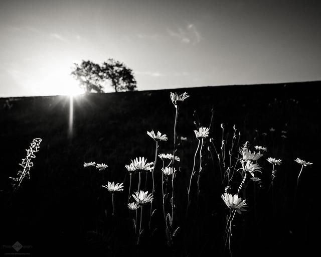Sunlit Flower #2