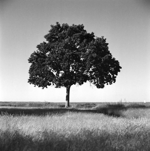 Træ ved vandkanten, Mikkelborg