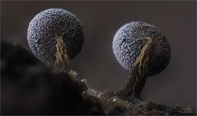 Minibäume