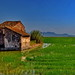 La Marjal paddy fields by gerard eder